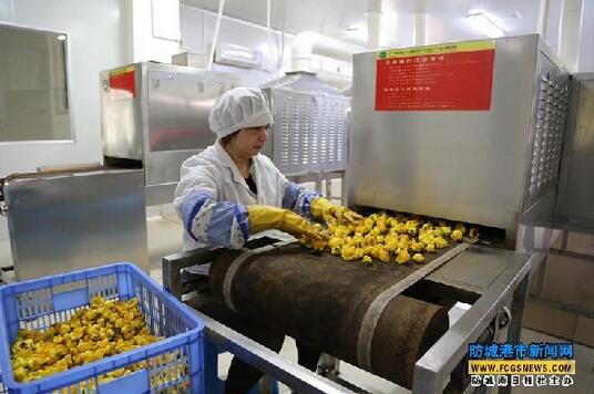 防城区厚植优势 推动金花茶产业大发展