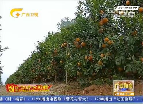 崇左:发展特色水果种植 优化农产品结构