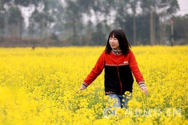 图7:2月14日,在广西柳州市融安县大良镇和南村,一名游客在油菜花田里踏青赏花。(谭凯兴 摄).JPG