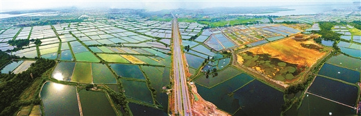 防城港市发展现代农业纪实:立足生态 突出边海