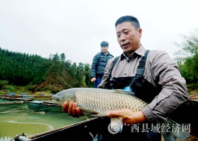 [融安县]特色水产养殖 助力脱贫攻坚