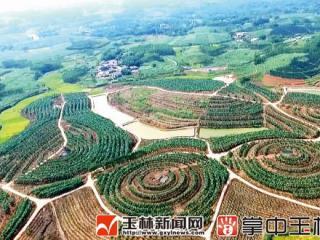 """陆川:九洲江""""生态种植带""""的转型秘密"""