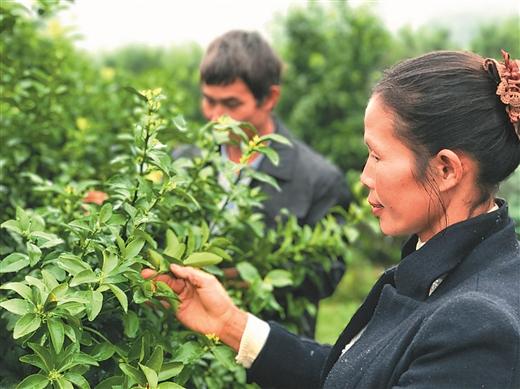 为农村经济发展增添新动能 聚焦我区农民工创业担保政策效应