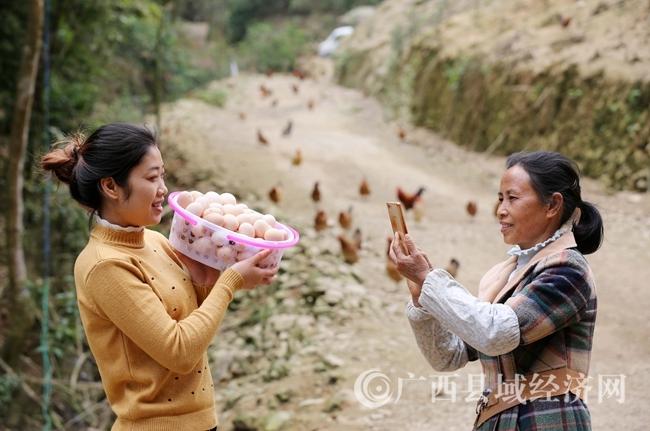 图12:4月11日,在广西柳州市融安县大坡乡岗伟村平土屯,何群英用手机拍摄鸡蛋。(谭凯兴 摄)