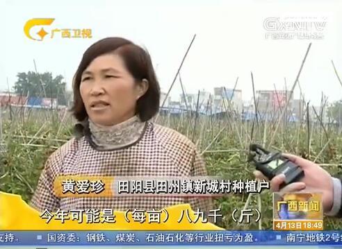 [田阳县]小果实创造大产业