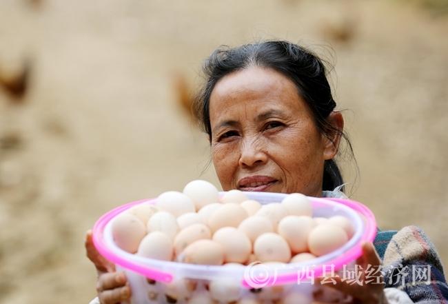 图13:4月11日,在广西柳州市融安县大坡乡岗伟村平土屯,何群英在展示鸡蛋。(谭凯兴 摄)