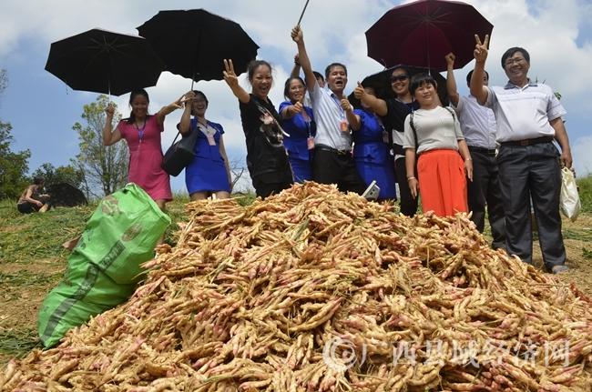 [金秀县]六巷乡:有机生姜种植1500多亩