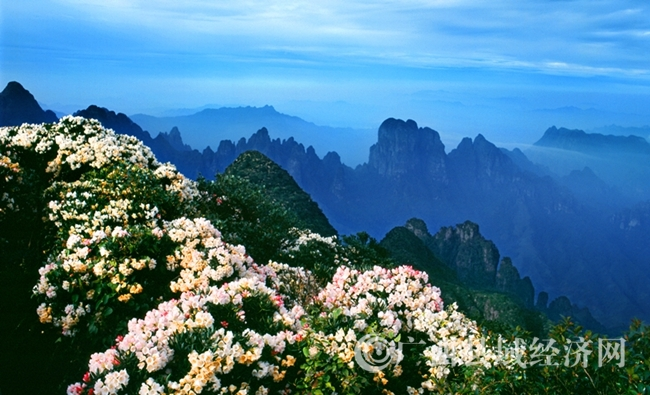 来宾金秀5月将举办杜鹃花旅游文化节