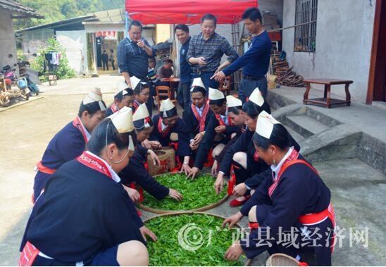 白牛屯的瑶民正在晾晒茶青。