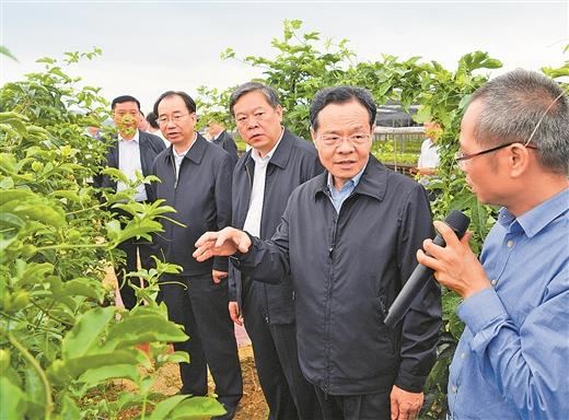 陈武深入岑溪龙圩调研 强调培育县域经济发展新优势