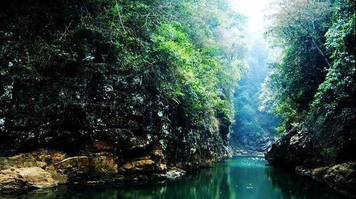 靖西市:通灵大峡谷