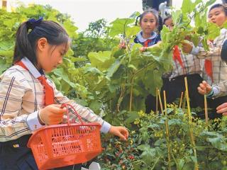 南宁市滨湖路小学的孩子们体验干农活