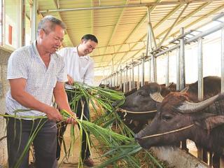 武宣县积极为贫困户发放扶贫贴息贷款发展产业