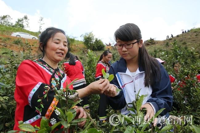 图为学生与村民学习体验采茶技艺