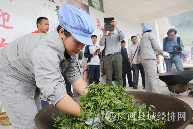 政协委员们在参观手工炒茶工过程