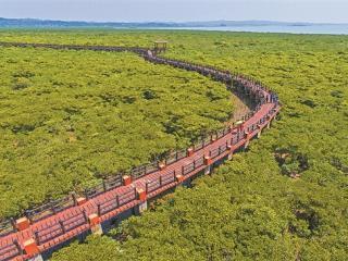 风景宜人的防城港市江山半岛红树林保护区
