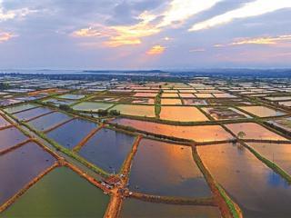 东兴:江平镇万亩迷人的连片虾塘