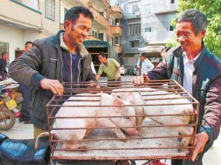 荔浦县:残联与养殖部门对农户进行种养技术培训并免费发放猪苗
