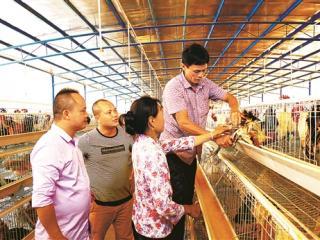 田东县依托家庭农场大搞林下养鸡见闻
