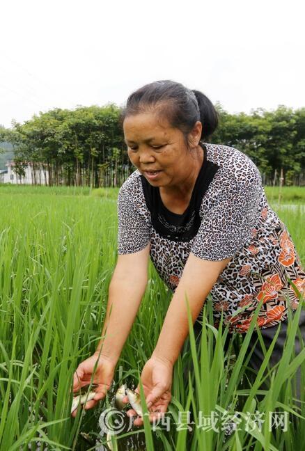 融水县:美食助力精准扶贫