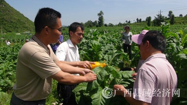南丹县召开2017年烟叶中后期管理暨烟叶等级结构优化处理现场培训会