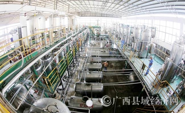 图2:7月26日,广西仙草堂制药有限责任公司工人在青蒿素提炼车间检查保养设备。(谭凯兴 摄)