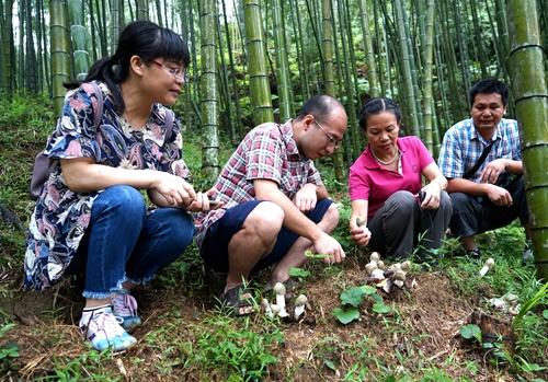 7月20日,在广西融水苗族自治县永富生态农业有限公司有机竹荪现代农业(核心)示范园区生产基地,培训班成员们在了解竹荪_副本.jpg