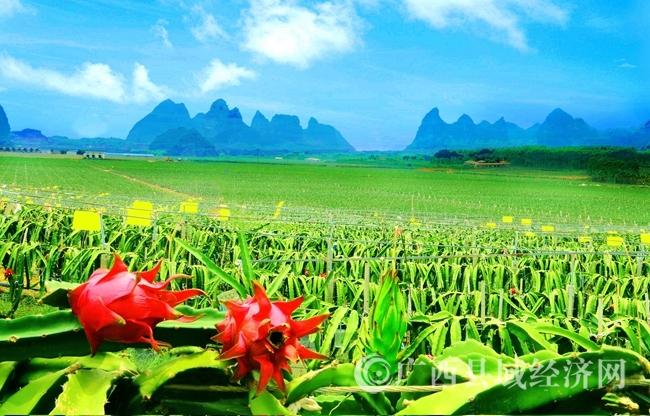 [武鸣区]发展主导产业 壮大县域经济 努力建设具有壮民族特色的新区