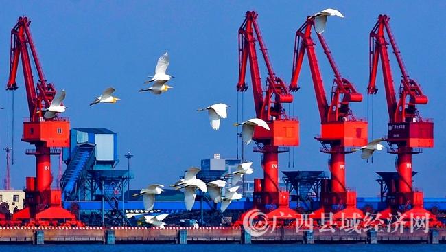 [港口区]发挥临港沿海优势 推动县域经济升级发展