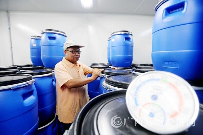 图16:7月26日,工人在广西仙草堂制药有限责任公司青蒿素成品仓库清点数量。(谭凯兴 摄)