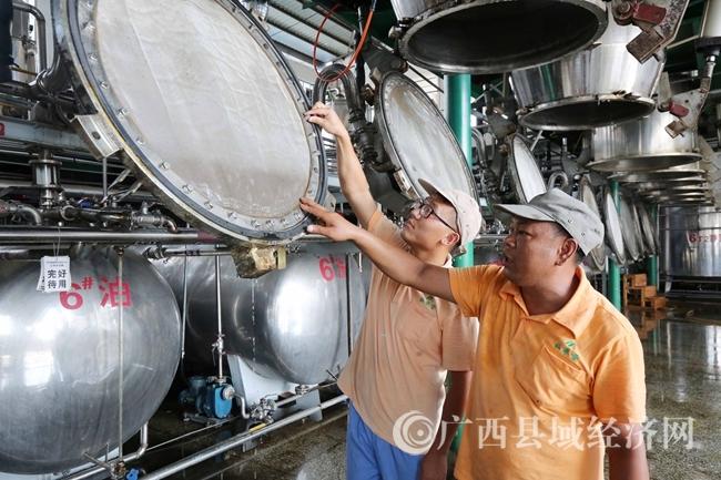 图3:7月26日,广西仙草堂制药有限责任公司工人在青蒿素提炼车间检查保养设备。(谭凯兴 摄)