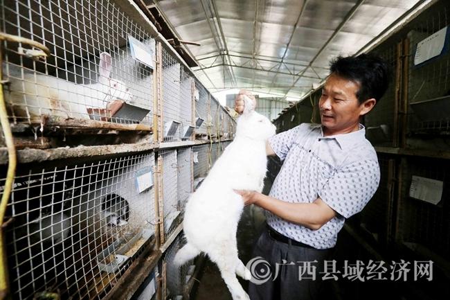 融安县:肉兔养殖助增收