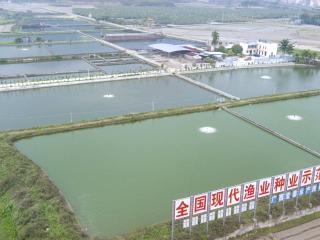 宏泰种鱼生态养殖基地