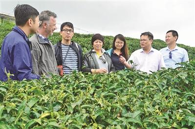 乐业县发展有机农业纪实:认真做农业 快乐做有机