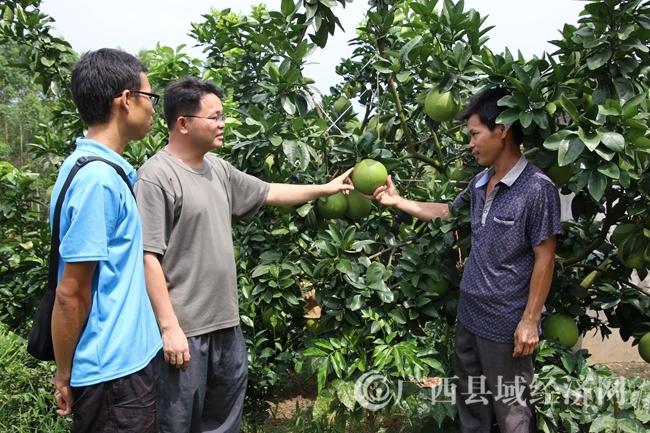 三里镇领导与霞山村合作社理事长提早研究旅游节接待工作