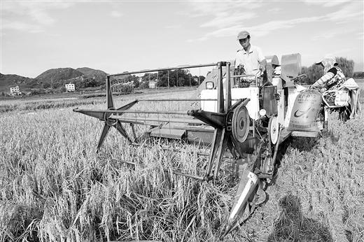 [全州县]农产品主产区走访:从大到强谋突破