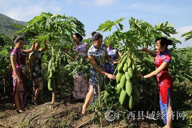 游客在观赏那羊屯经济合作社主产的鲜木瓜和辣椒