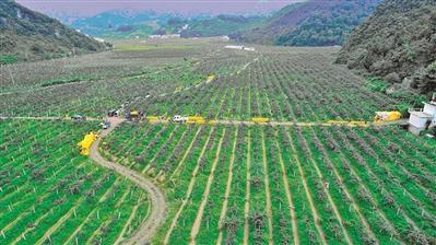 [乐业县]发展有机农业纪实