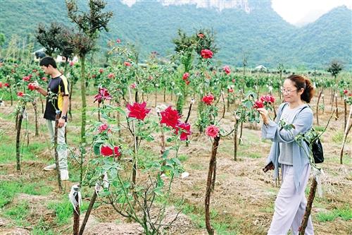 [上林县]三里镇生态农旅产业现雏形