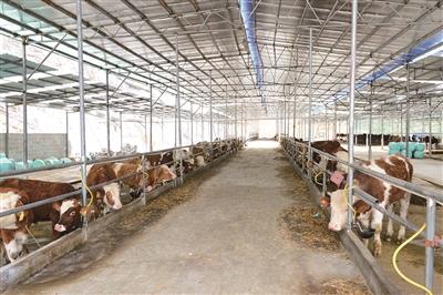 肉牛产业规范化。.jpg