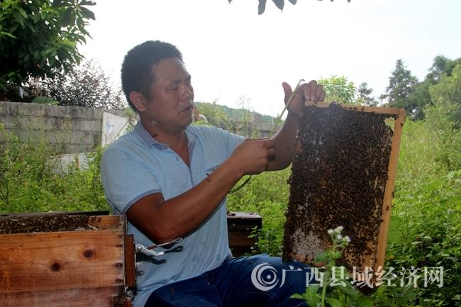 恭城潘彦君:子承父业痴心不改  养蜂传艺代代相传