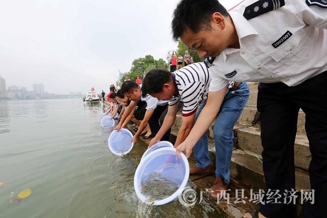 图7:9月6日,在珠江上游的融江广西柳州市融安县段,工作人员将鱼苗放流融江。(谭凯兴摄)