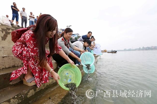 图9:9月6日,在珠江上游的融江广西柳州市融安县段,市民将鱼苗放流融江。(谭凯兴 摄)