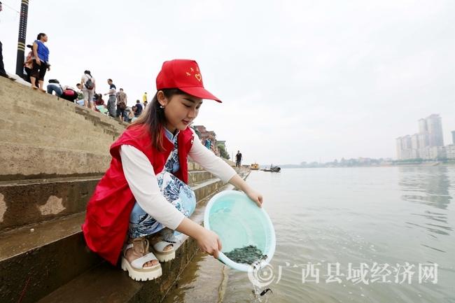 图10:9月6日,一名青年志愿者将鱼苗放流珠江上游的融江广西柳州市融安县段江中。(谭凯兴 摄)