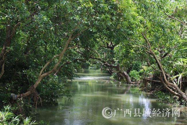 三里双龙河水榕走廊