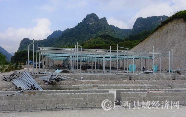 南丹县新建万头牛场 带动瑶乡农民脱贫致富