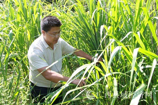 杨秀宝:走石漠化发展之路 带群众共同奔致富