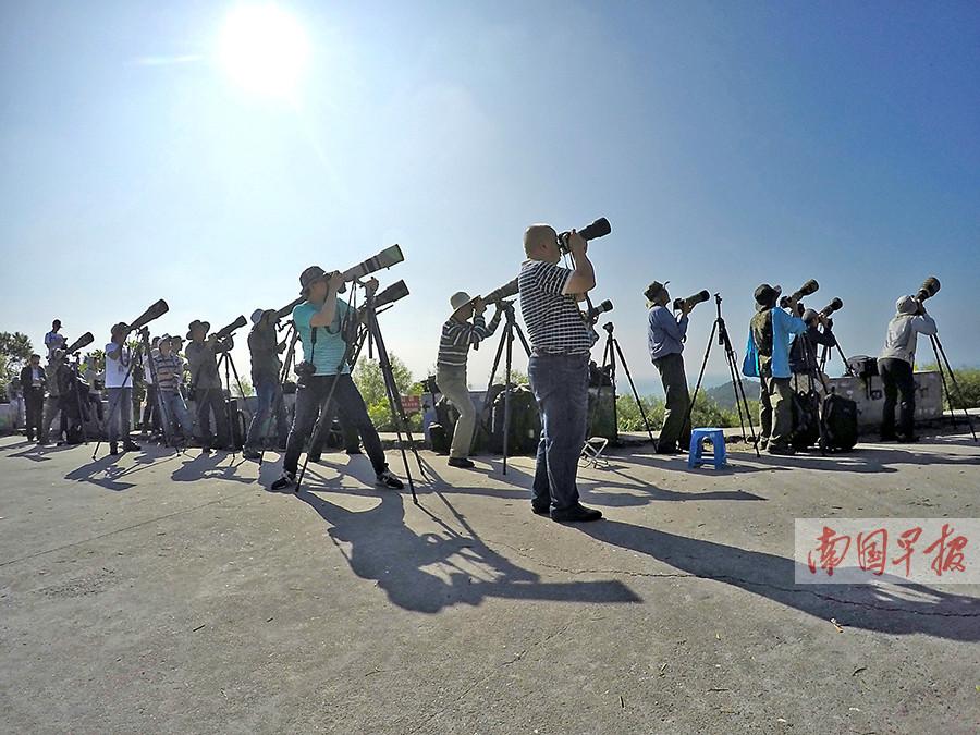 北部湾(北海)赏鹰节之广西观鸟赛开幕