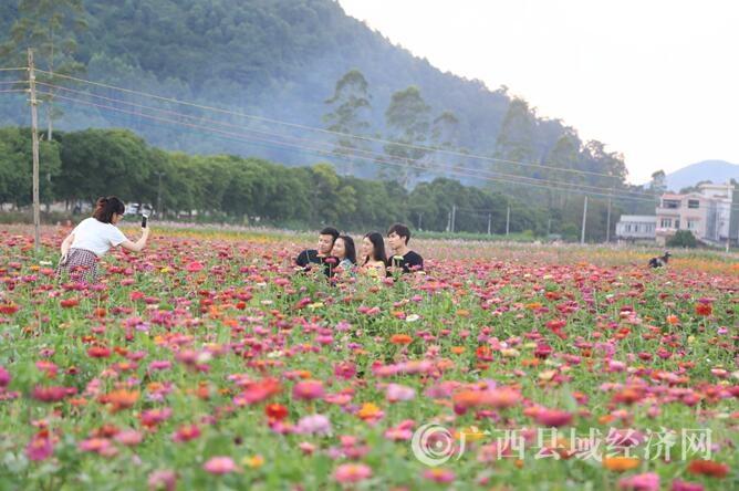 [蒙山县]中秋节200亩花海惊艳游人