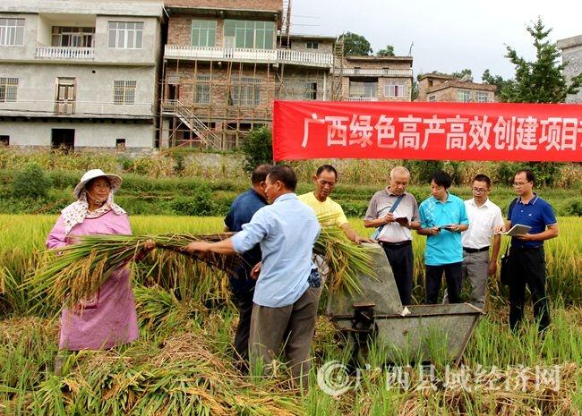 [南丹县]万亩水稻绿色高产高效项目创建出成效
